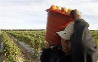 100709-farm worker-hmed.grid-4x2